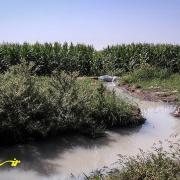 پساب های کشاورزی مضرترین منابع آلوده کننده محیط زیست