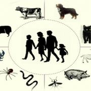 بیماریهای مشترک بین انسان و حیوانات