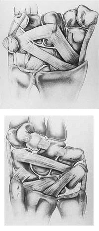 در سطوح قدامی و خلفی کارپ رباط های متعددی دیده می شود که استخوانچه های کارپ را به یکدیگر و به استخوان های اطرافشان متصل می کند
