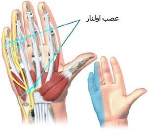 عصب اولنار Ulnar nerve