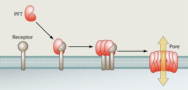 تغییرات و تبدیلات زیست شناختی سموم در بدن (بیوترانسفورماسیون)