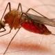 MALARIA-مالاریا