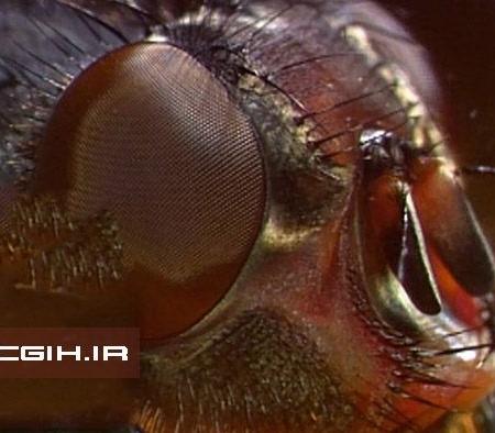 مبارزه با حشرات و جوندگان