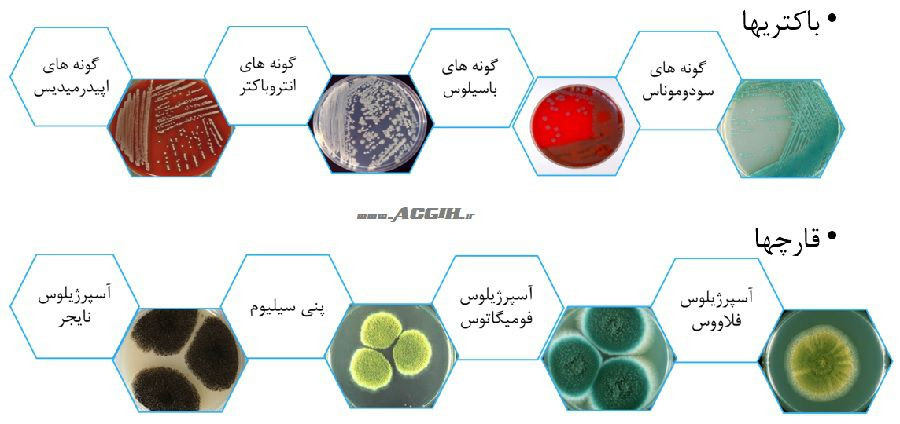 انواع میکروارگانیسمهای غالب در محیط های بیمارستان