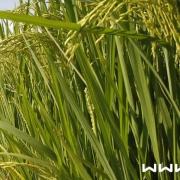 بهداشت حرفه ای در کشاورزی