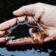 مواجهه شغلی پوست با مواد شیمیایی در محیط کار