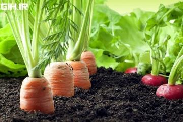 سلامت و ایمنی محصولات کشاورزی ارگانیک