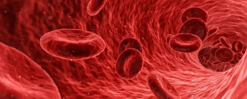 بیماری های خون و سیستم خونساز