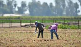 ارزیابی و اولویت بندی شاخص های استرس حرارتی در کشاورزان به روش TOPSIS FUZZY