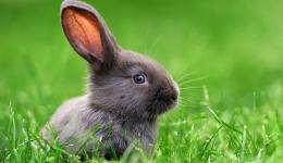 اثر صدا بر تغییرات شنوایی خرگوش با بهره گیری از گسیل های صوتی اعوجاجی گوش